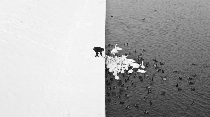 A man feeding swans and ducks from a snowy river bank
