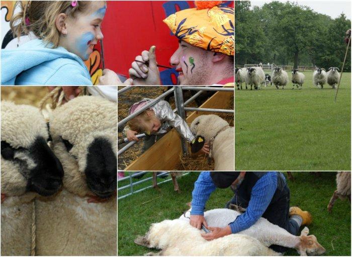 collage schapen