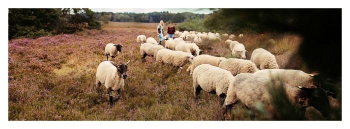 schap1
