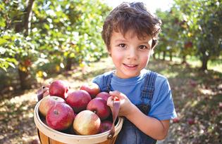 boy-w-apple-basket-19489750Small-315x205