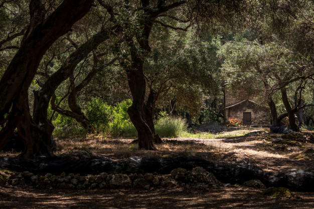 house-nature-forest_109663-22